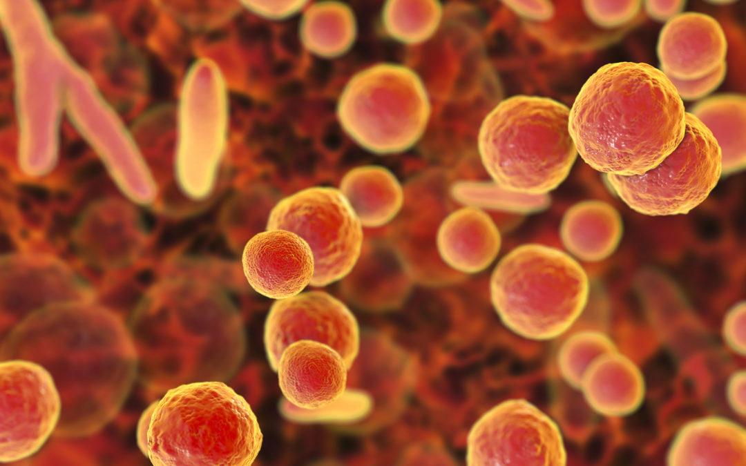 Mitigating Mycoplasma Contamination: The Importance of Vigilance in Aseptic Processing